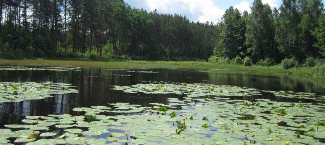 Всесвітній День охорони водно-болотяних угідь!!!
