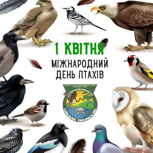 Міжнародний День птахів (День зустрічі птахів) (International Birds Day)